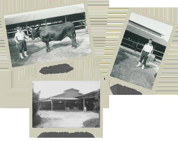 小田畜産の歴史写真