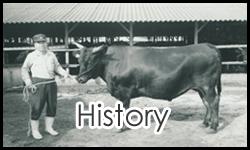 history of odagyuイメージ
